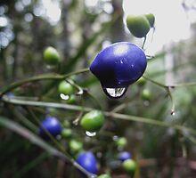 Brightly coloured berries  by Sue-Ellen Cordon