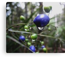 Brightly coloured berries  Canvas Print