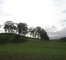 Glowing tree top hill by Sue-Ellen Cordon