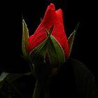 A Flower A Month  by rhian mountjoy