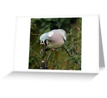 Short sighted wood pigeon Greeting Card