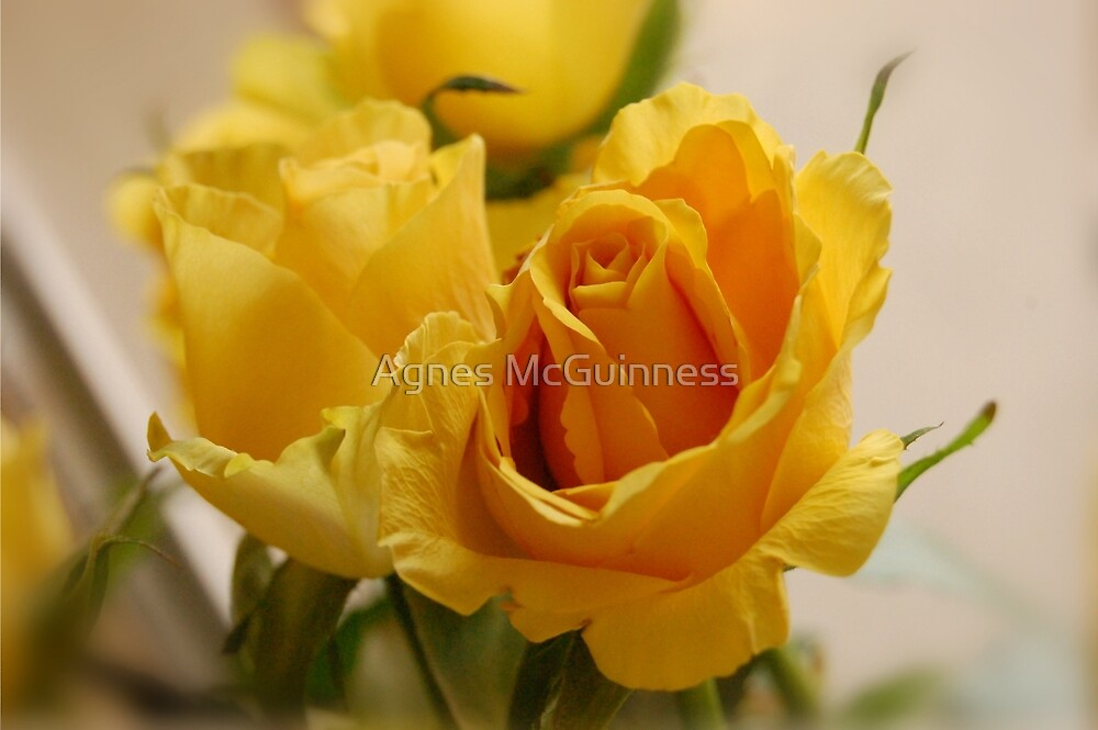 Mellow yellow by Agnes McGuinness