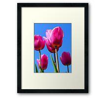 Vibrant Crimson Tulips Framed Print