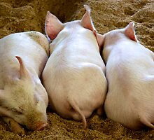 Sleeping Piglets  by doughnut