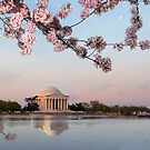 Jefferson memorial at Cherry Blossom time by bettywiley