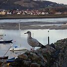 Conwy 12. by Hannah Edwards