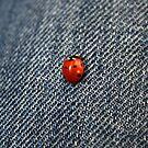 A Bug in my Pants by Vivek Bakshi