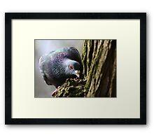 'Wood' Pidgeon Framed Print