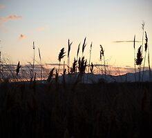 Evening Light by Jan  Tribe