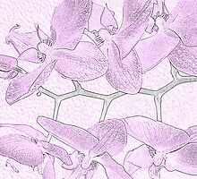 Orchid Sketch by Chintsala