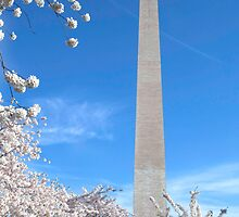 Washington monument at Cherry Blossom time by bettywiley