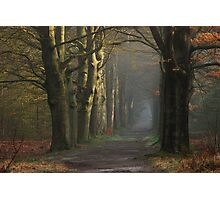 Venturing onto the mystery lane Photographic Print