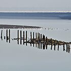 Posts in water. by swhite99