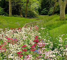 Chanticleer Primula Garden by Marilyn Cornwell