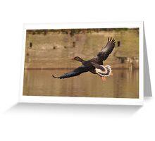 Greylag Goose Greeting Card