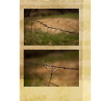 Barbed Wire Diptych Photographic Print