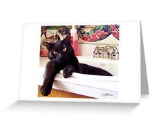 """""""Pampered Pussy Cat"""" Greeting Card"""