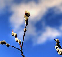 Catkins by Larry Trupp
