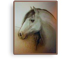 Horse head drawing Canvas Print