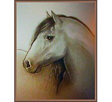 Horse head drawing Photographic Print