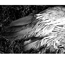 Failure to Fly Photographic Print