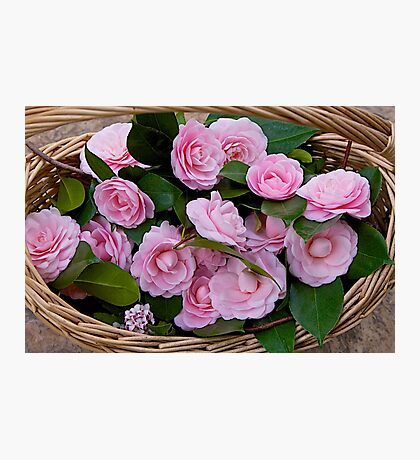 Basket of Camellias Photographic Print