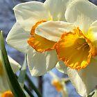 Spring! by LisaRoberts
