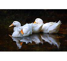 Three Ducks Photographic Print
