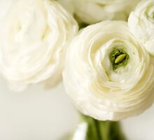 White ranunculus flowers by Wendy Kennedy