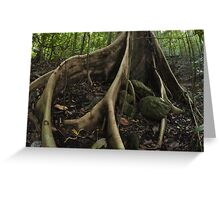 buttress roots - far north queensland Greeting Card