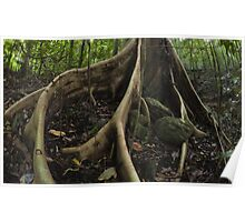 buttress roots - far north queensland Poster