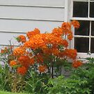 Gordens Orange tree by Jeannie Matthews