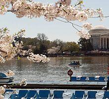 Cherry Blossoms Washington DC by dcborn