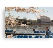 Cherry Blossoms Washington DC Metal Print
