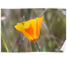 Poppy Stained Glass Poster