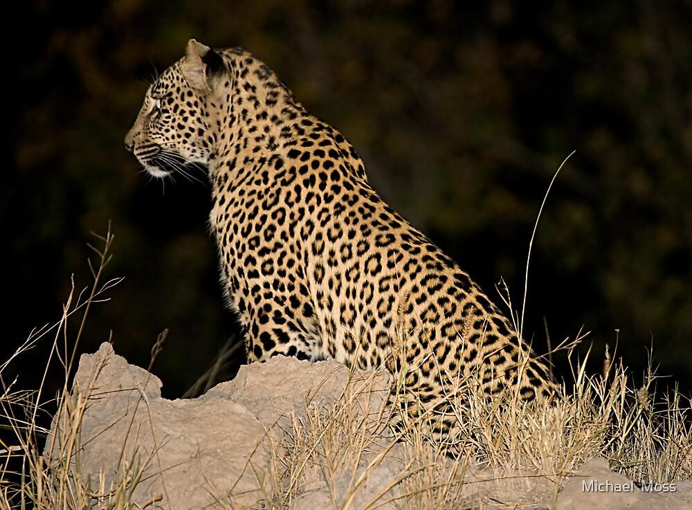 Female Leopard by Michael  Moss
