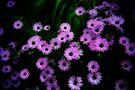 Fluttering Purple by Kayleigh Walmsley
