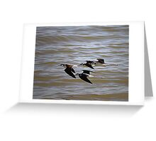 Black-Necked Stilts At Salton Sea Greeting Card