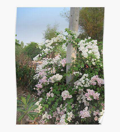 Roadside Flowers Poster