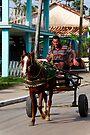 Horse and cart, Vinales, Cuba by David Carton