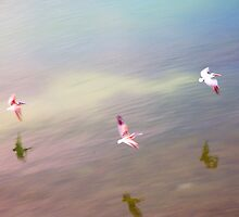 Bird Flight Impressions by Mal Bray