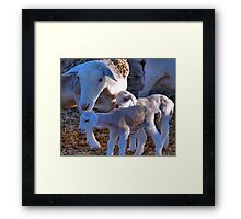 PRIVATE COLLECTION TWO - My sheep Framed Print