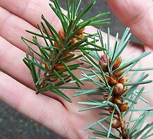 Handsome Conifer by Daogreer Earth Works