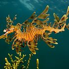 Leafy Seadragon by MattTworkowski
