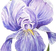 Giant Iris by FranEvans