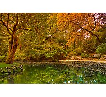 Autumn at Alfred Nicholas Memorial Gardens Photographic Print