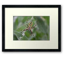 Wasp Spider Framed Print