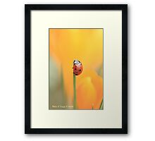 Seven spot lady beetle against a yellow crocus Framed Print