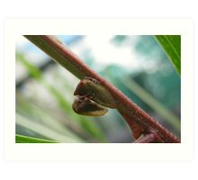 Two Treehoppers Art Print