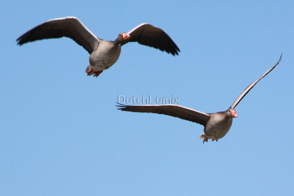 Two Geese in flight_5052 by DutchLumix